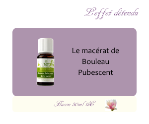 Le macérat de Bouleau Pubescent