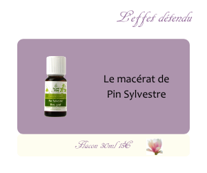 Le macérat de Pin Sylvestre